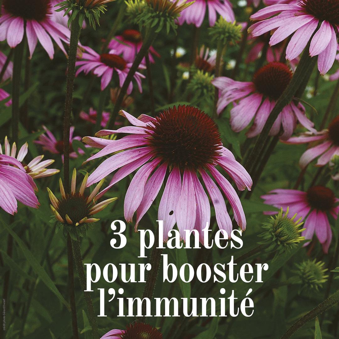 plante pentru intarirea sistemului imunitar tratamentul și simptomele viermilor
